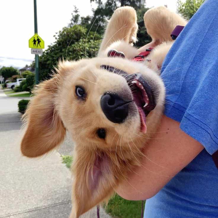 Картинка радость животных