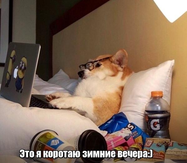 Зверушки-позитивчики:) (30 фото)
