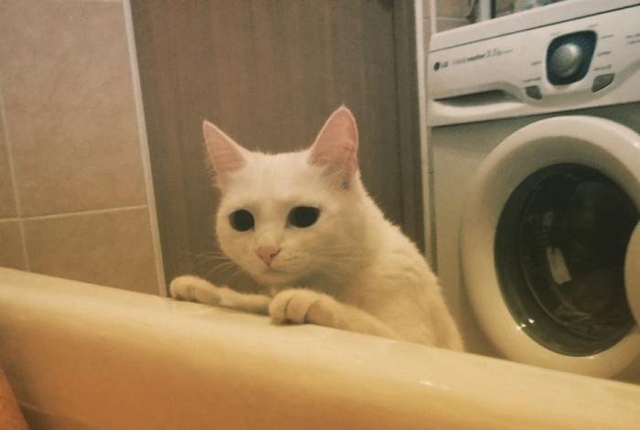 """Юмор: Кот """"спасает"""" хозяйку из ванны"""