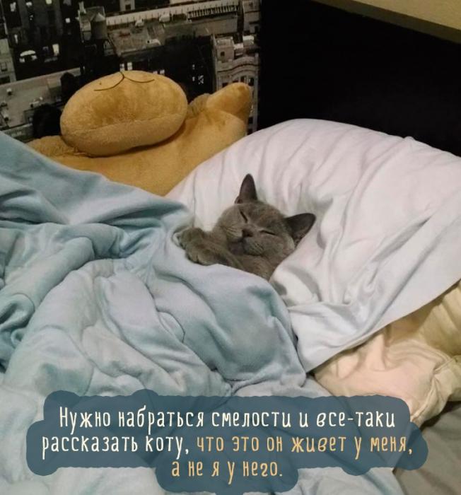 Лучшая подборка картинок и фото самых смешных кошек (38 фото)