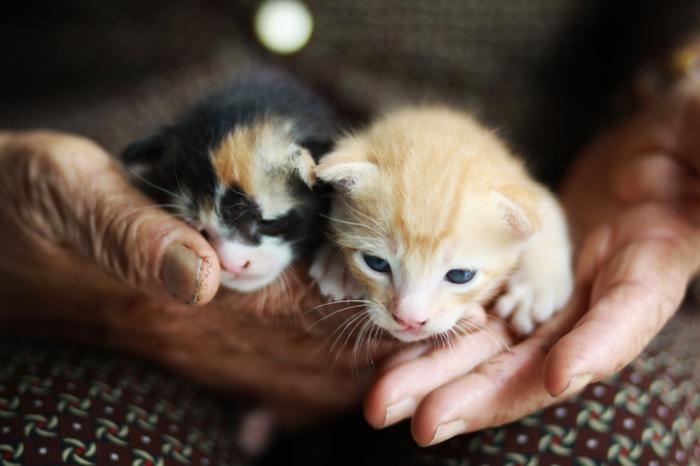 Бабушка думала, что подобрала троих котят, пока внук не сказал ей правду
