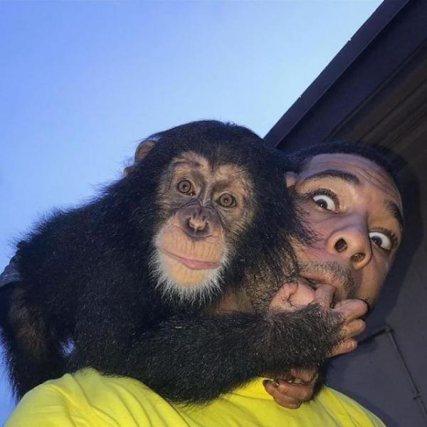 «Король джунглей» из Майами (27 фото)