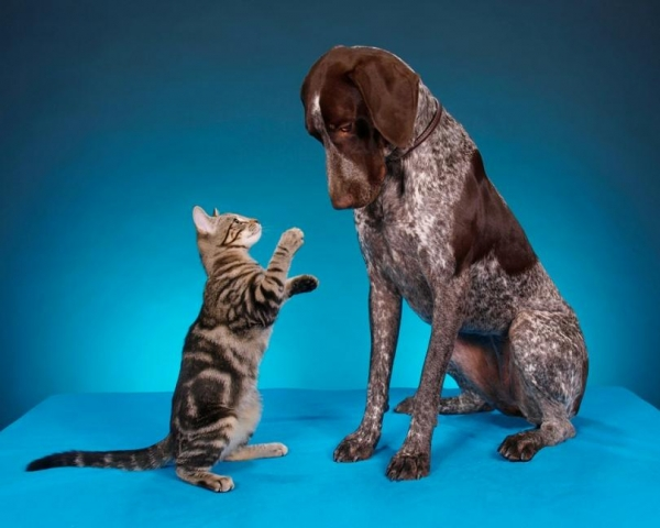 Учёные сравнили мозг кошек и собак (5 фото)