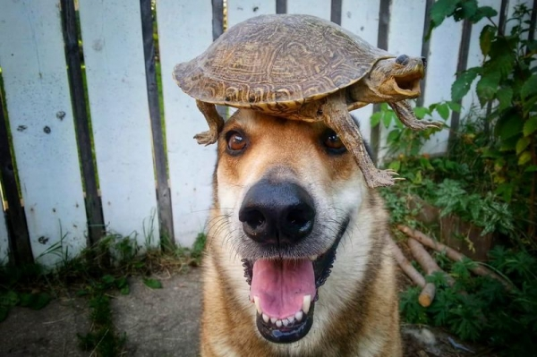 Чудеса балансировки в исполнении 11-летней собаки (12 фото)