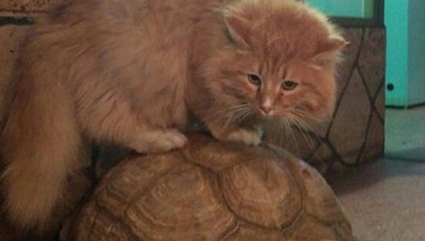 Как кот Батон предотвратил побег огромных черепах из иркутского зоопарка (3 фото)