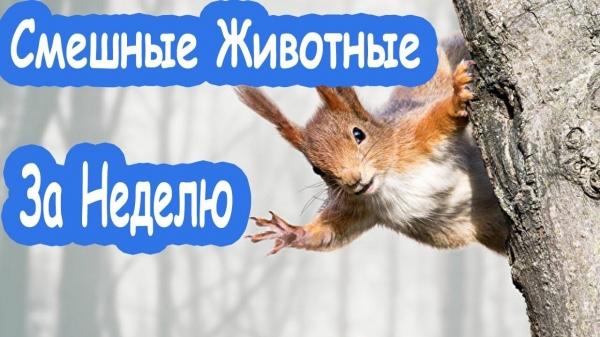 Ну очень смешные приколы про животных:)