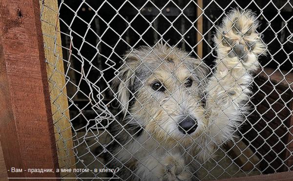 Зоозащитники предупреждают: В год Собаки псов сперва будут дарить, а потом выбрасывать