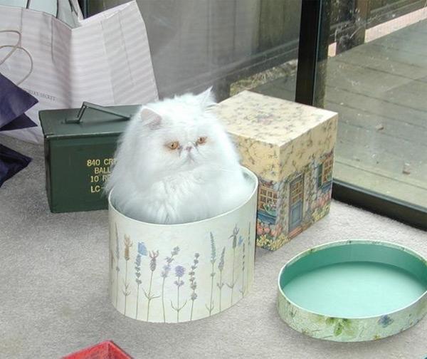 Юмор: Кошки вездеcущие (20 фото)