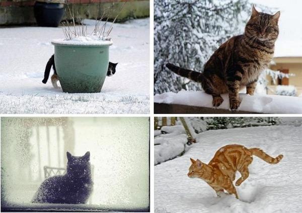 Юмор: СнегоКоты (18 фото)