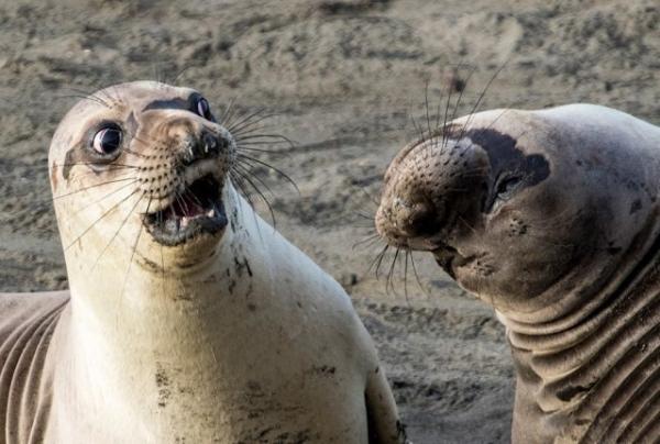 Юмор: Самые комедийные животные (27 фото)