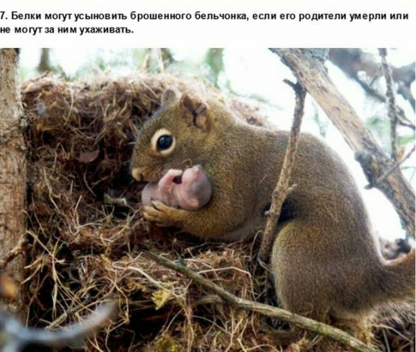 Познавательные факты о зверушках (30 фото)