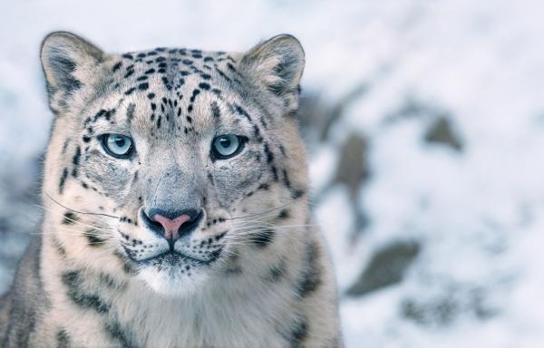 Очаровательные портреты исчезающих животных (23 фото)