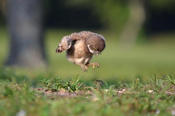 Маленькие карапузики:) (30 фото)