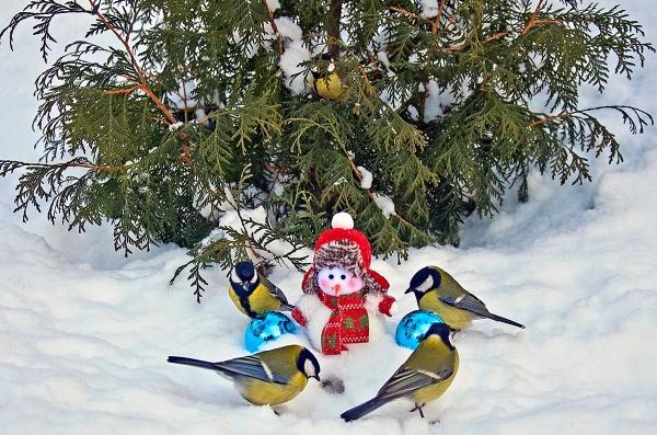 Красивые птицы в зимнюю пору (30 фото)