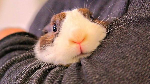 Очаровательные кролики (25 фото)
