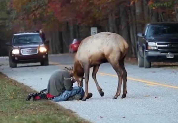 Знакомство молодого оленя с фотографом
