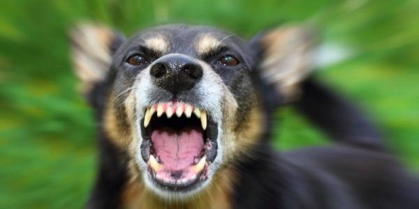 5 важных советов, если на вас напала собака