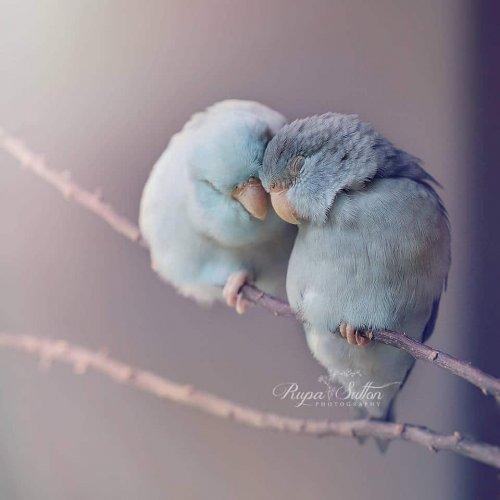 Сказочно-красивые фотографии с попугаями от Рупы Саттон (14 фото)