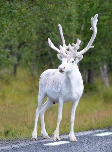 Природа постарась на славу! (25 фото)