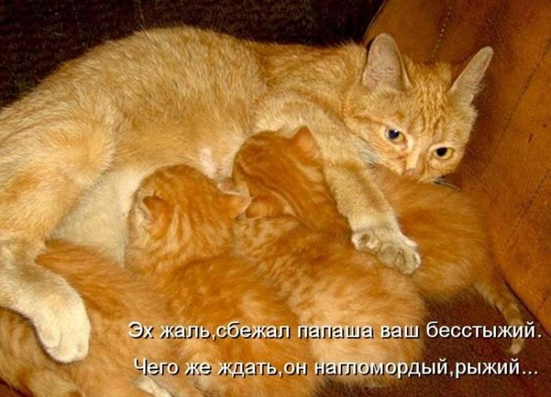 Смешные картинки про рыжих котов с надписями, картинки наш