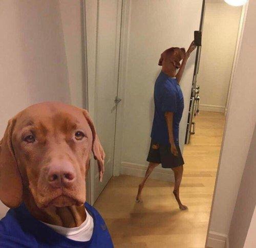 Собачьи селфи:) (20 фото)