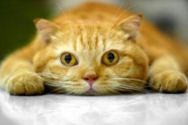 Милые котейки! (30 фото)