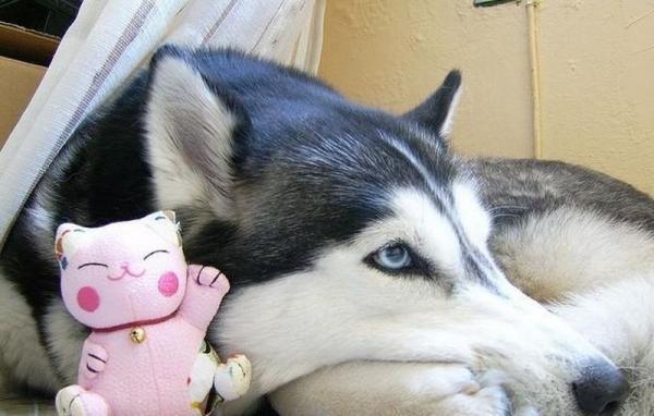 Зверушки и их любимые подружки-игрушки:) (50 фото)