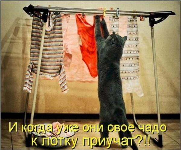 Забавные котоматричные картинки (30 фото)