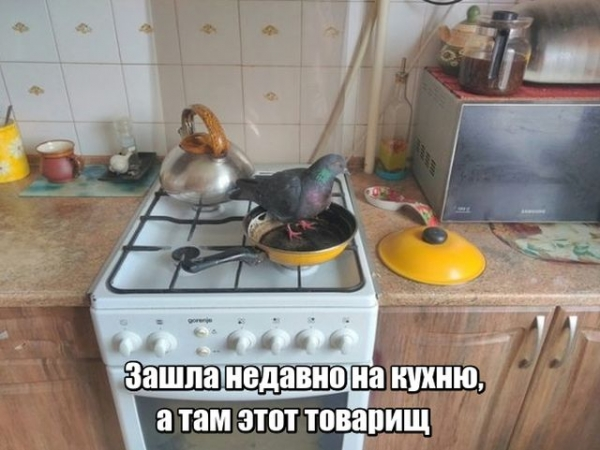 Забавные картинки (35 фото)