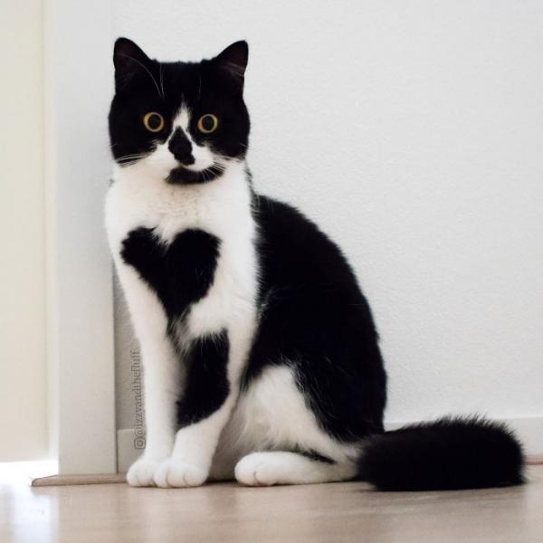 Кошка с сердцем на груди (13 фото)