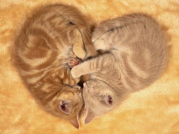 Сегодня-Всемирный день кошек! (35 фото)