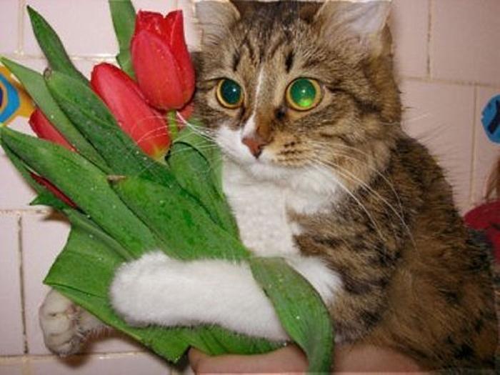 Смешные поздравления от котов 356