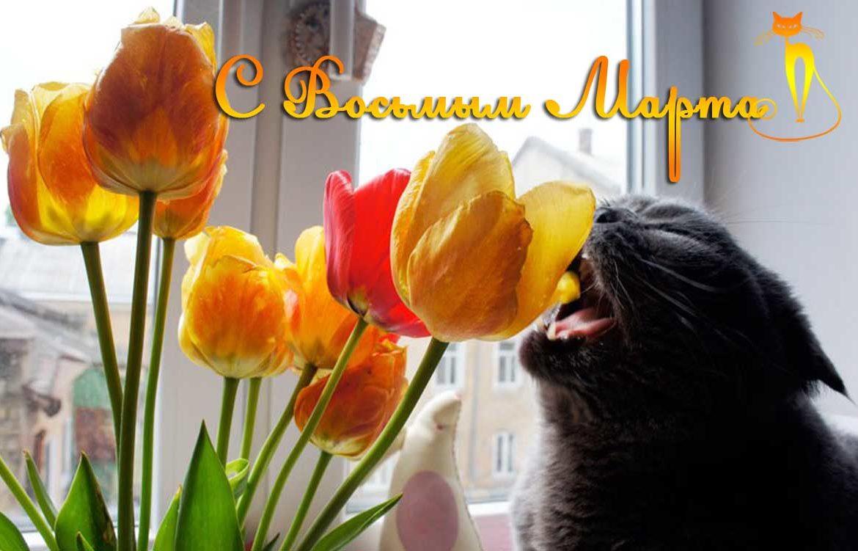 Коты 8 марта картинки, друзья прикольные