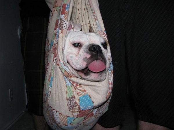 Юмор: Собаки-улыбаки (20 фото)
