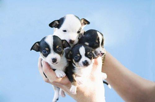 Прелестные щенята (25 фото)