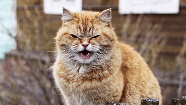 Мартовские коты: когда гормоны бьют по голове (4 фото)