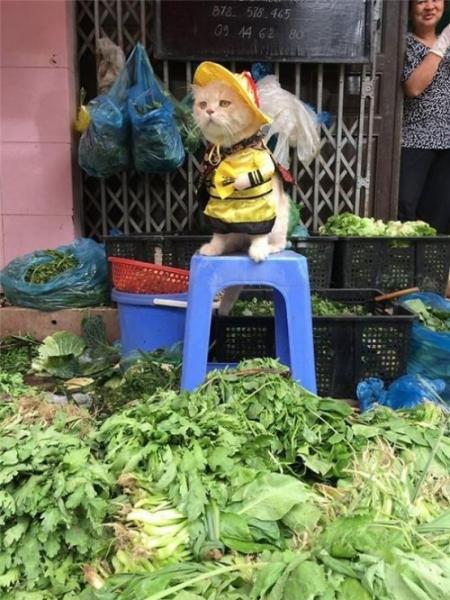 Самый очаровательный продавец во Вьетнаме, который покорит ваше сердце:) (14 фото)