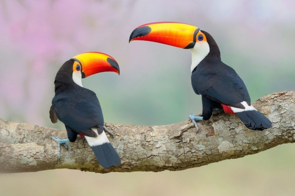 Птичий конкурс (17 фото)