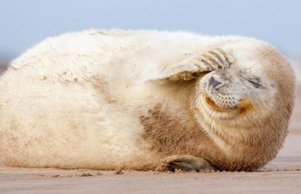 Пятничные тюлени (20 фото)
