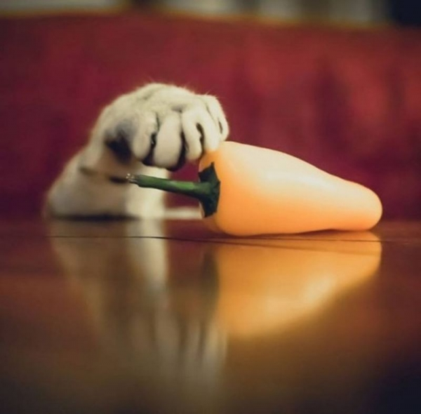 Хитрые воришки (45 фото)