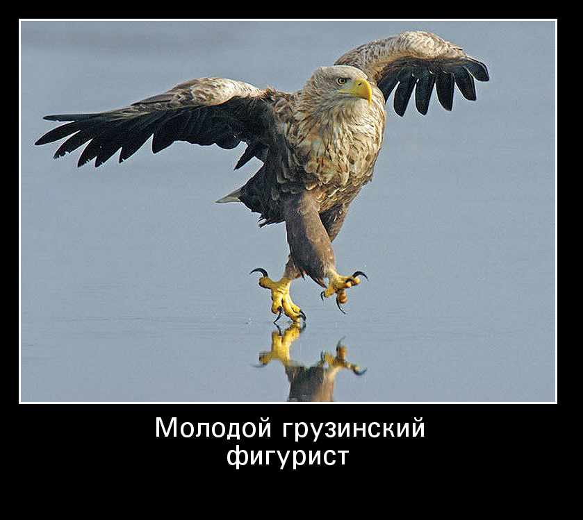 фото орла с демотиватор кроме
