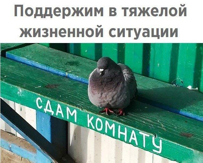 прикол голубь доносчик картинка исида считались