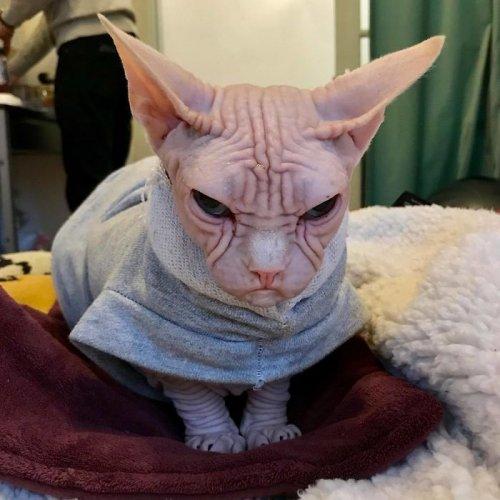 Сердитый обояшка Локи (10 фото)