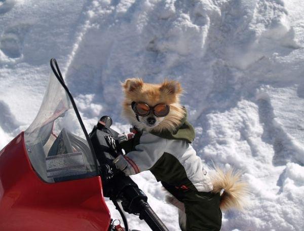 Смешные картинки на снегоходе
