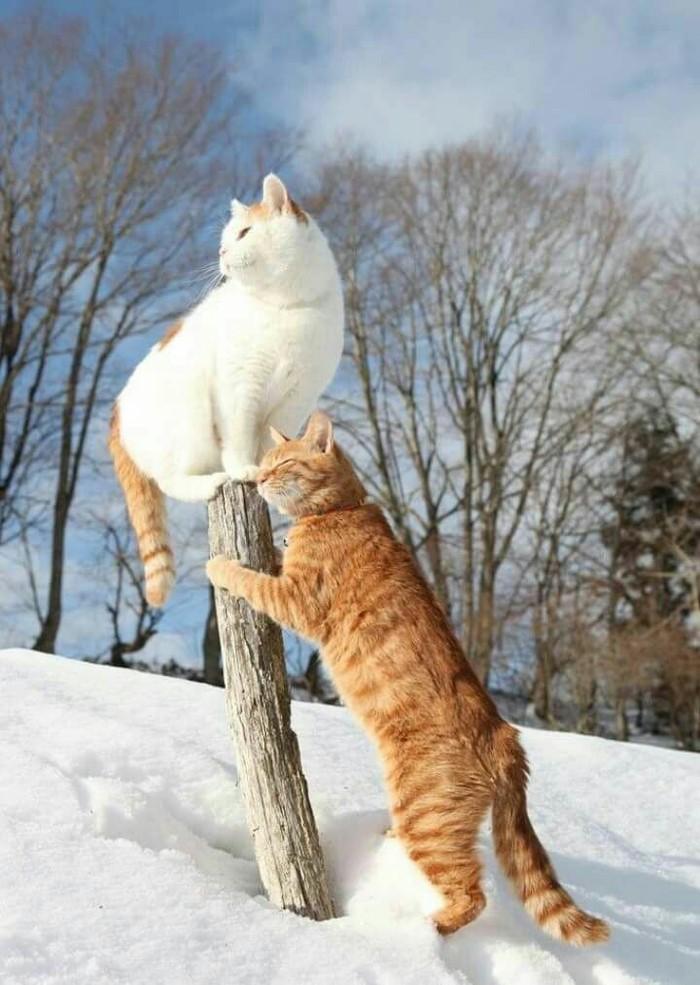 обычной картинки ждем зиму прикольные момент знакомства