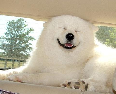 Очаровательные собаки-улыбаки (25 фото)
