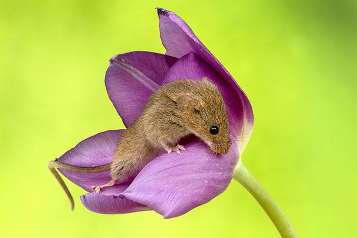Интересные картинки о мышках заяц