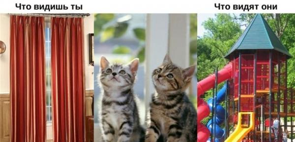Юмор: Мир глазами животных (10 фото)
