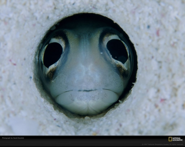 Угорь-немного необычная рыба (15 фото+видео)