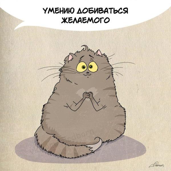 Юмор: Чему стоит поучиться у кошек:) (10 фото)